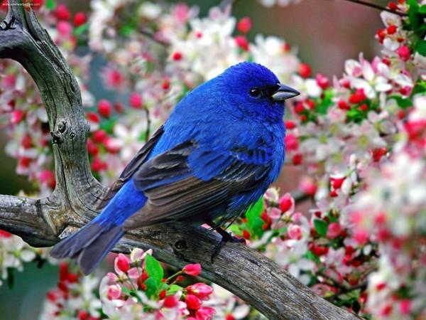 Les oiseaux  0e7eb12b