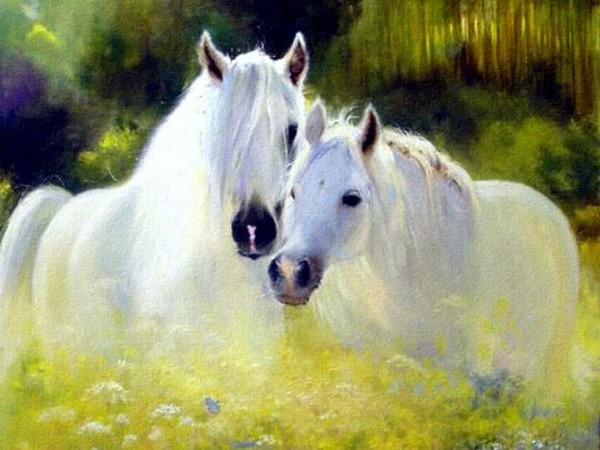 Fonds ecran chevaux for Belle photo de fond ecran