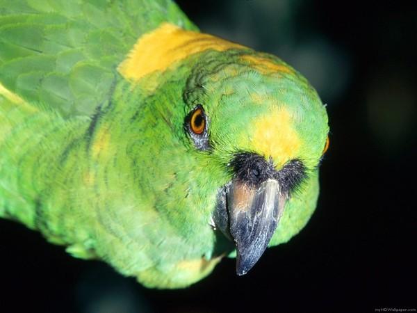 Les oiseaux  1a4695ee