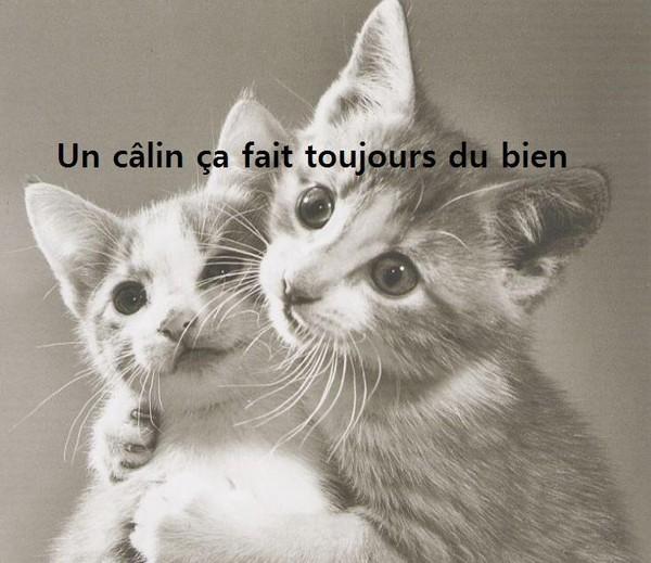 """Résultat de recherche d'images pour """"humour chat bisous"""""""