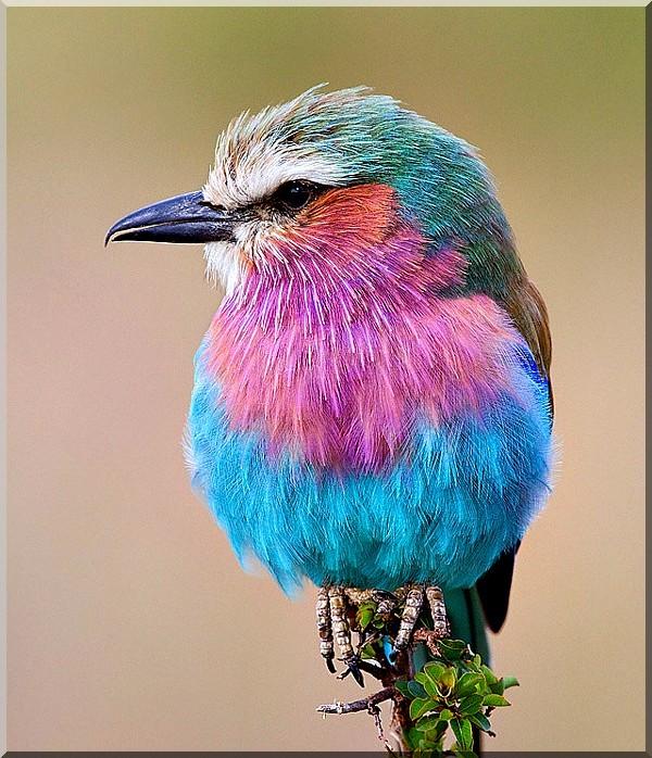Les oiseaux  37791c78