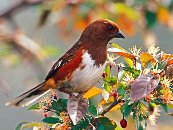 Les oiseaux  3c765626