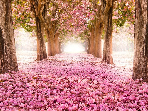 paysage rose