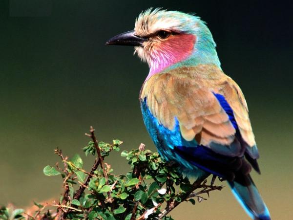 Les oiseaux  6a76bbfa