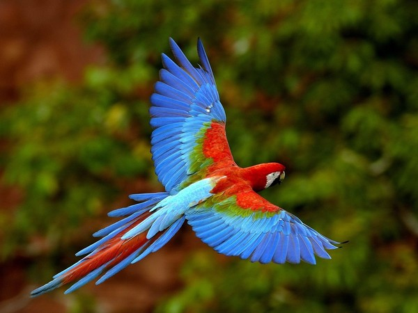 Bel oiseaux for Photo oiseau