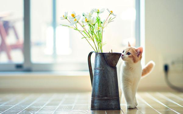 chat et vase de fleurs