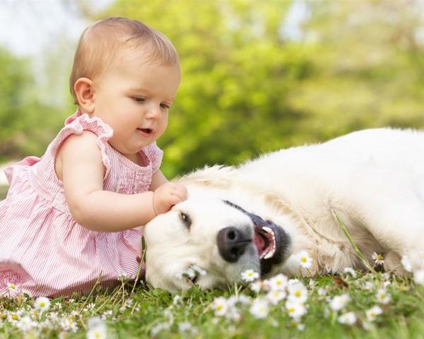 l enfant et son chien