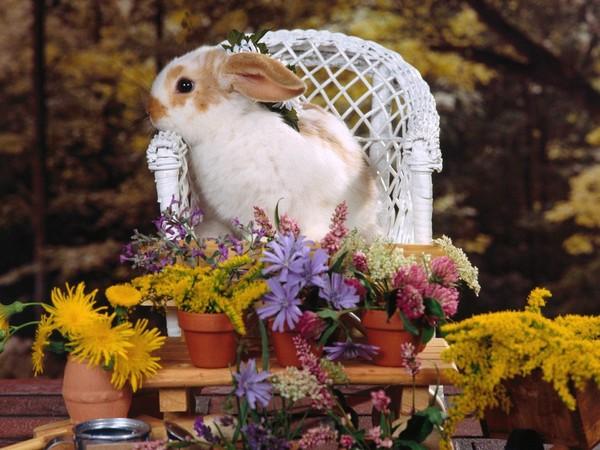 petit lapininou
