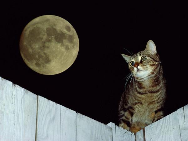 fond d'écran chats