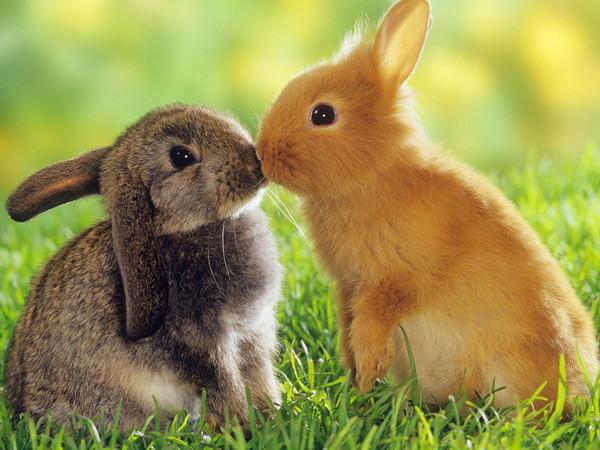 bisous de lapins