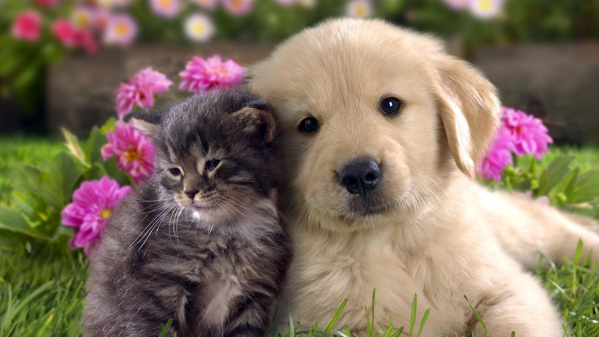 Fond d ecrans chiens for Fond ecran chiot