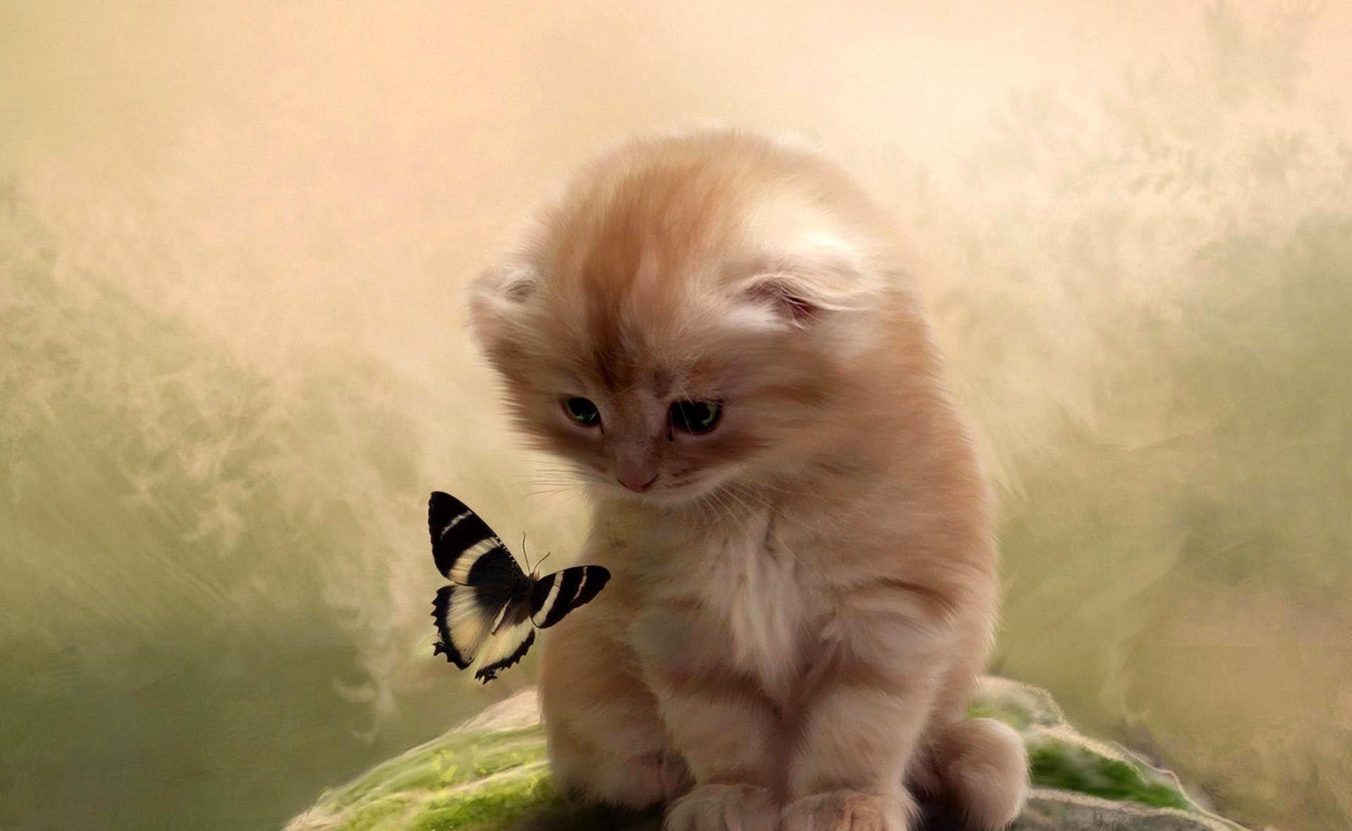 chaton et son papillon. Black Bedroom Furniture Sets. Home Design Ideas