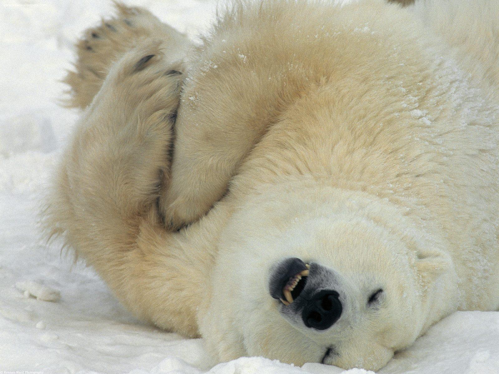 http://yogi.y.o.pic.centerblog.net/o/dfaadd9a.jpg