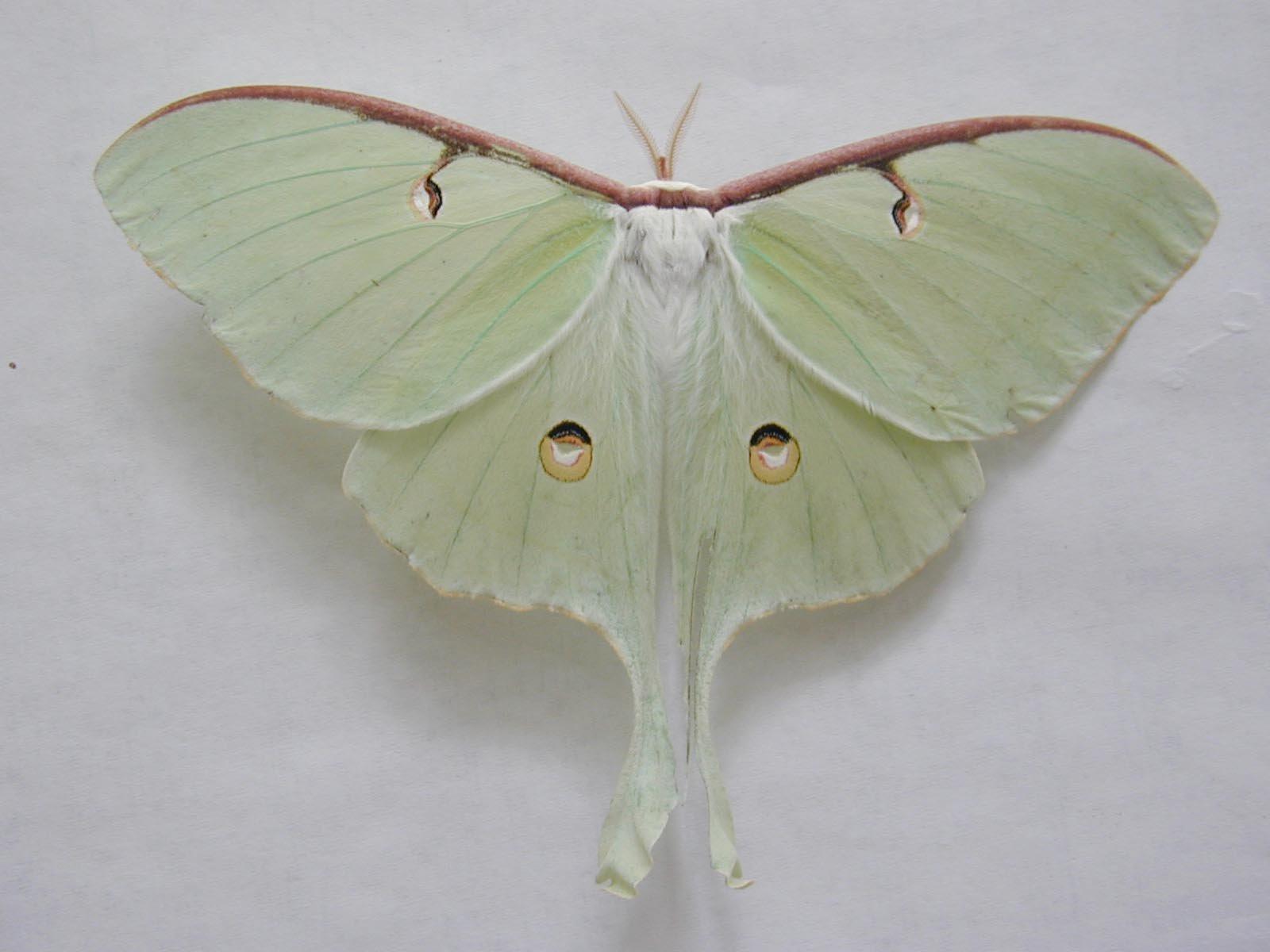 Fond ecrans papillons for Fond ecran papillon