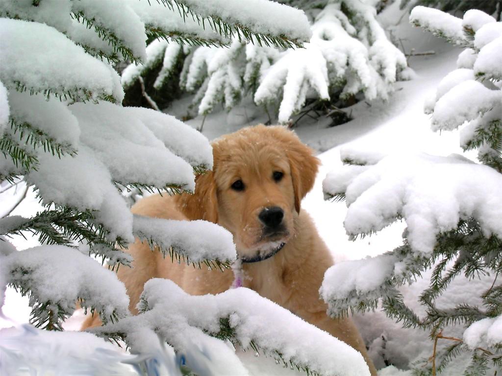 Fond d ecrans chiens page 4 for Fond ecran hiver animaux